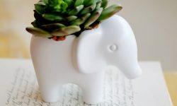 succulents hossdesign myfixituplife elephant